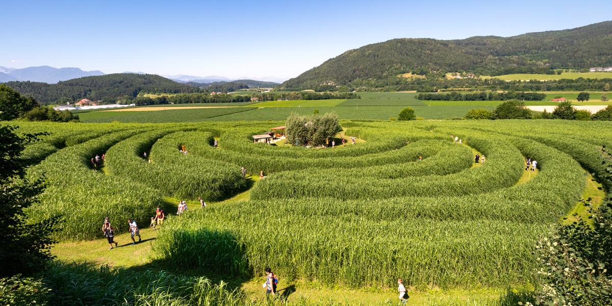 Labyrinth im Elefantengras
